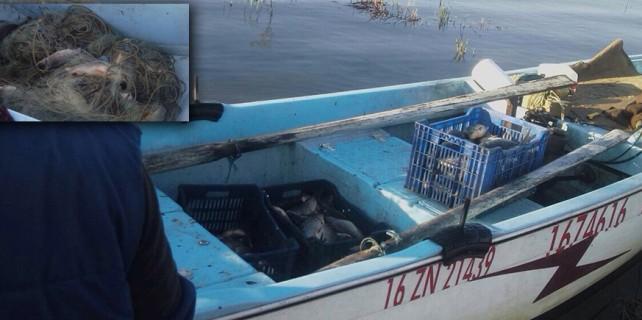 Bursa'da kaçak avcılara jandarma darbesi