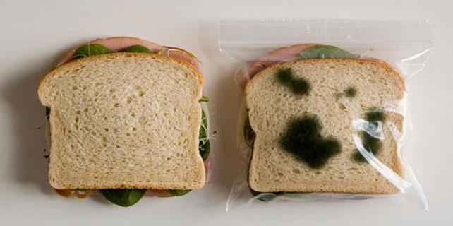 Marketten aldığı tost ekmeği küflü çıkınca
