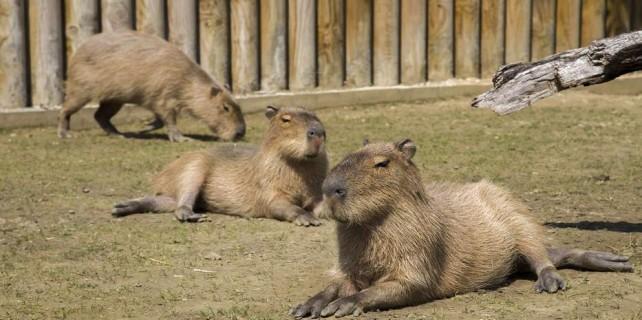 Bursa Zoopark'ın yeni üyeleri