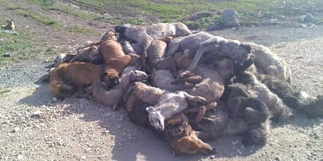 Bursa'da köpek katliamı cezasız kalmadı