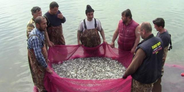Bu balıklar her gün Bursa'dan ihraç ediliyor
