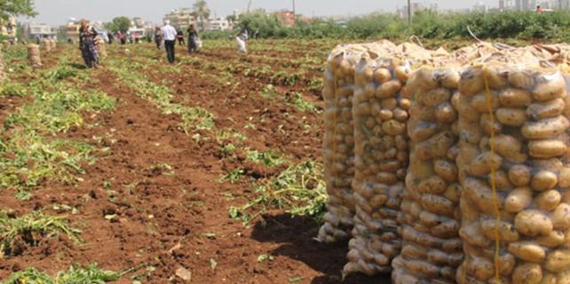 Patates 5 lira olunca bakın ne yaptılar?