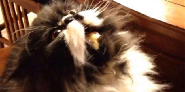 Kedinin lezzet testi!