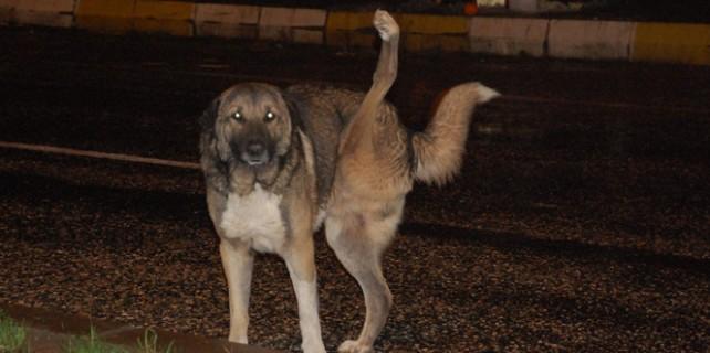 Bursa'da köpekli tehdit
