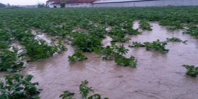 Tarım arazileri sele teslim oldu