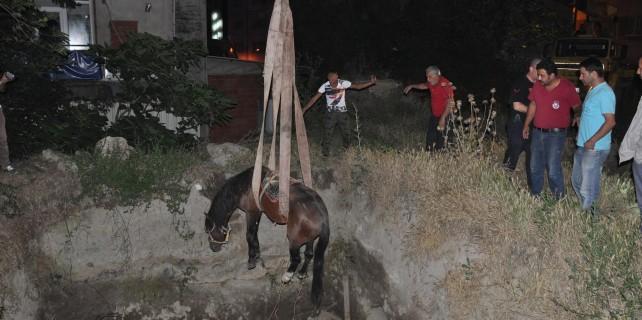 Çukura düşen atın başına bakın neler geldi!