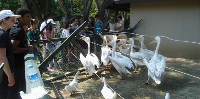 Zoopark'ın hayvanlarını Amerikalı öğrenciler doyurdu