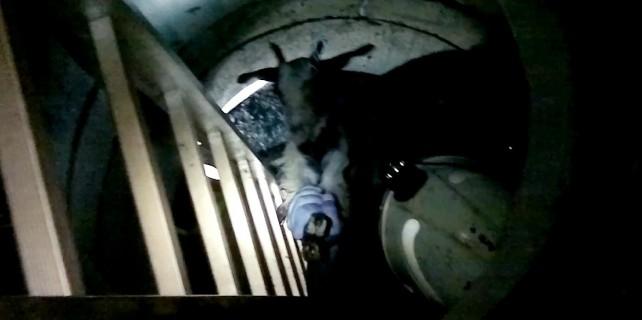 Bursa'da kuyuya düşen keçiyi itfaiye ekipleri kurtardı