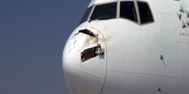 Bir leylek yüzünden 255 yolcu ölümden döndü