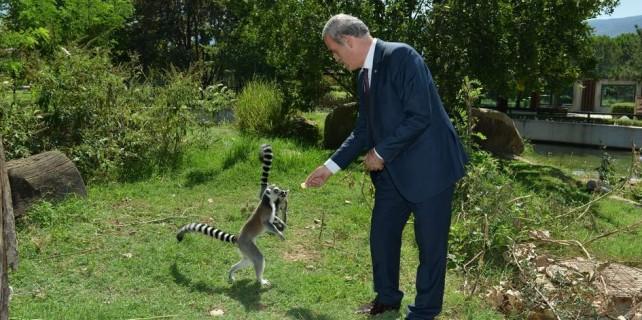 Zoopark genişliyor...Başkan Altepe elleriyle besledi