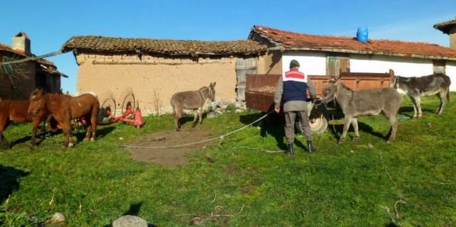 Bursa'da at eti tacirleri uslanmıyor