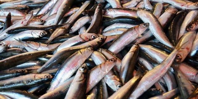 Balıkçılar müjdeli haberle döndü...