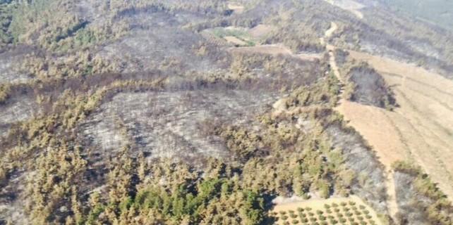 Sağlık Bakanı'ndan yanan orman için garanti