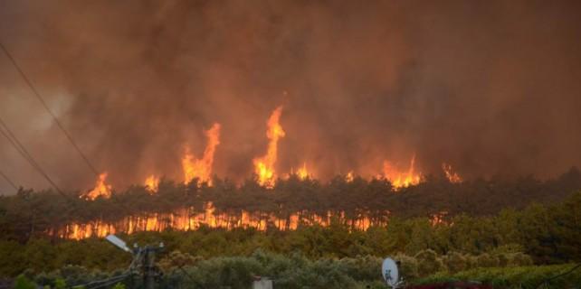 Bursa'da yanan ormanın gerçek rakamı dudak uçuklattı