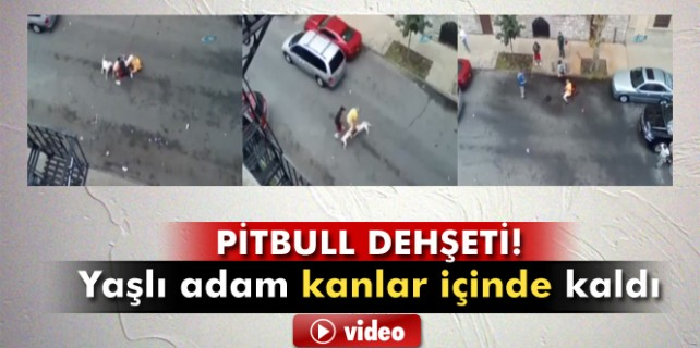 Pitbull dehşeti kameraya böyle yansıdı