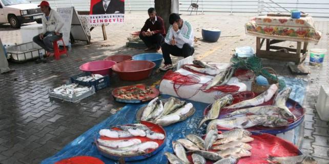 Bu balıklar açık arttırmayla satılıyor