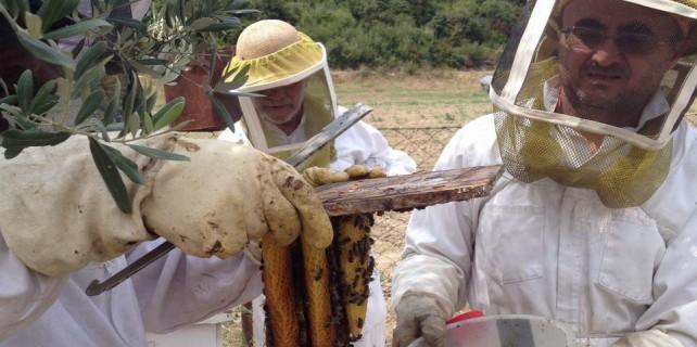 Arı ölümleri korkutucu boyutlara ulaştı