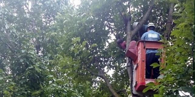 Ölüm ceviz ağacında yakaladı