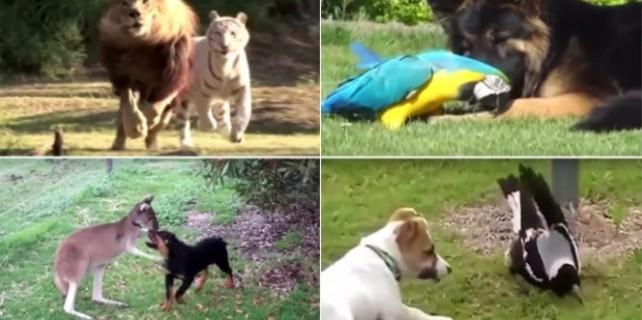 Hayvanların şaşırtan dostlukları