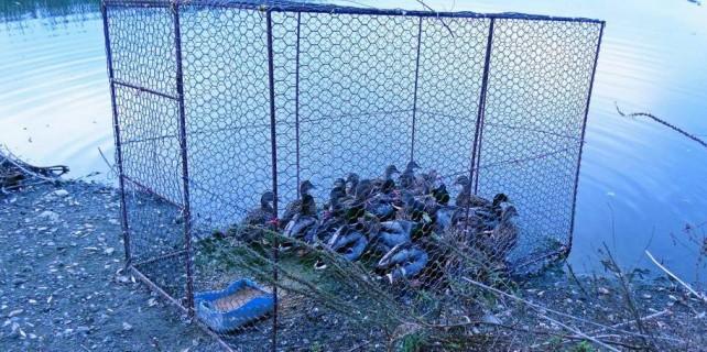 Bursa'da kaçak avcılara büyük operasyon...