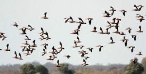göçmen kuşlar karacabey longoz