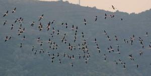 karacabey longoz kuşlarr