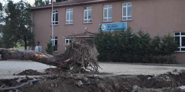 Okul bahçesinde ağaç katliamı...