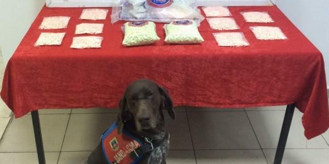 Narkotik köpeğinden büyük bingo...