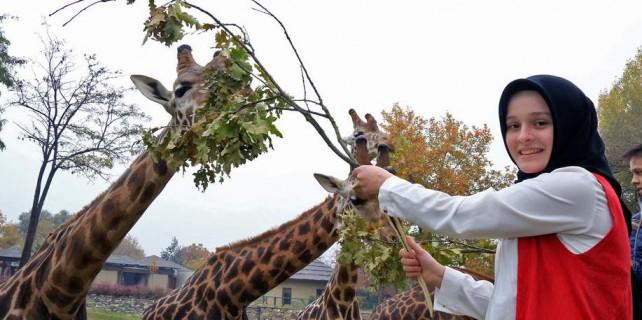 Çocuklar zürafaları elleriyle besledi...