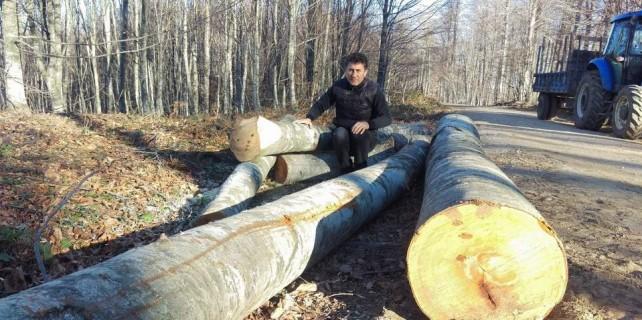 Bursa'da ağaçlar neden feda edildi?