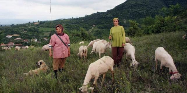 Bursalı hayvancılara büyük müjde...