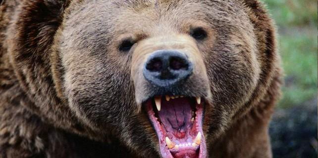 Eve giren ayı herkesi şok etti