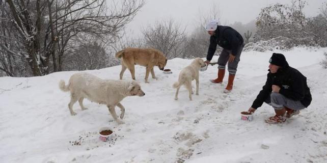 Uludağ'daki hayvanlar da unutulmadı...