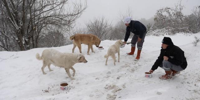 Osmangazi Belediyesi Sahipsiz Hayvanların İmdadına Yetişti