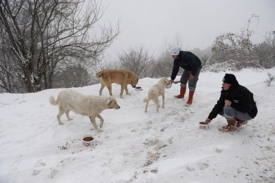 Aç Hayvanlar Beslendi 7
