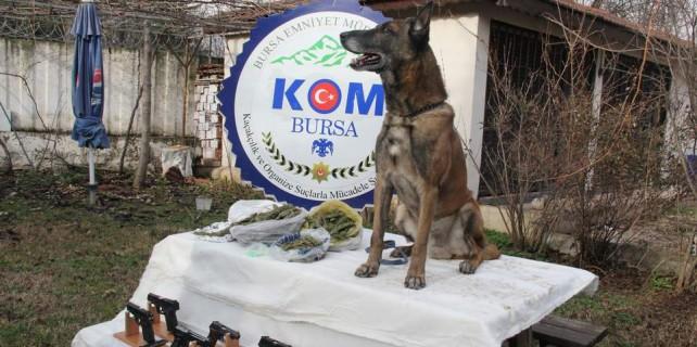 Bursa'da bonzai satıcılarına şok baskın