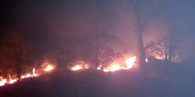 Bursa'da orman yangını...
