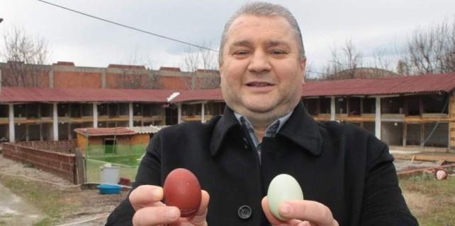 Bursa'da bu tavuklar rengarenk yumurtluyor