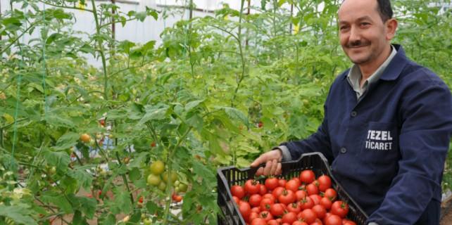 Topraksız tarım alanı 100 dönüme ulaştı