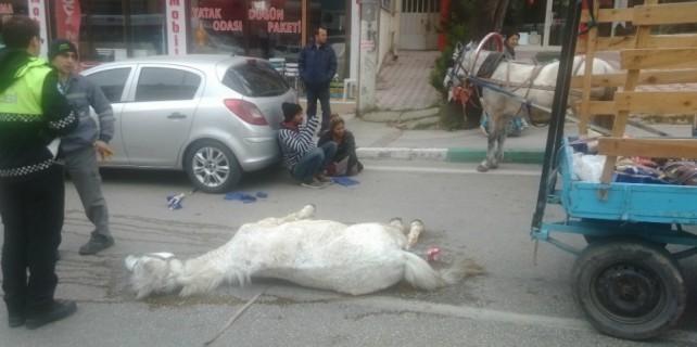 Ölen atının başından ayrılmadı