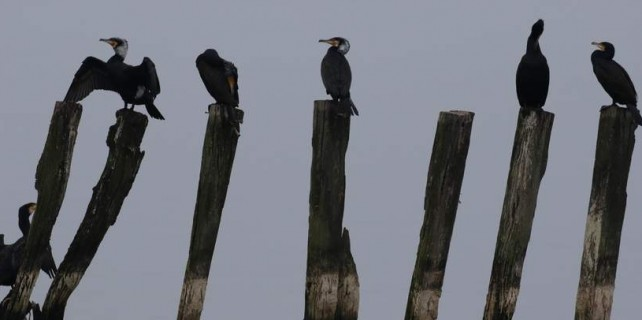 Bursa'da kuşlara yakın takip...