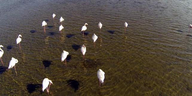 Flamingo Cumhuriyeti