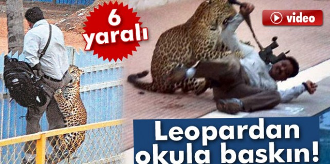 Leopardan okula baskın...İşte dehşet anları
