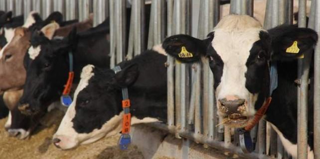 Bursalı süt üreticilerine şok