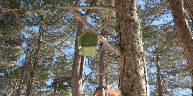 Ormandaki kuşlara ev yapımı