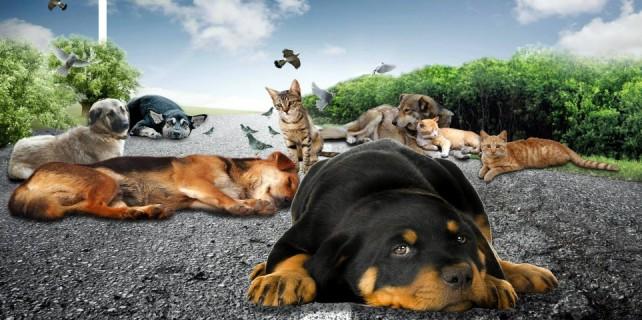 'Sokak hayvanları için farkındalık' etkinliği