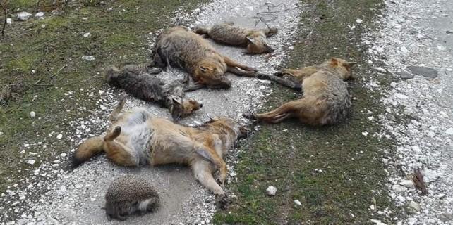 Bursa'da hayvan katliamına soruşturma...