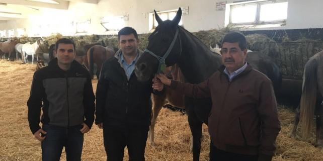 Sultansuyu TİGEM'de geleceğin şampiyonları seçildi