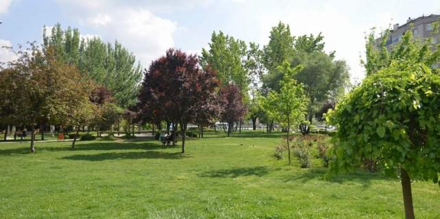 Bursa'da ağaçlar nasıl kesilmekten kurtuldu?