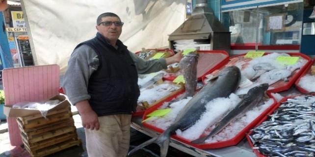 Mudanyalı balıkçı birbirinden ilginç balıkları sergiliyor